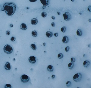Cryoconite holes - generally considered to be the most biodiverse microbial habitats on glacier surfaces and one of the features we will study during GRIS15