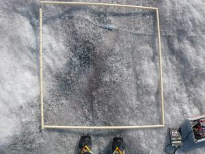 The dark sediment visible in the 1mx1m quadrat in this picture from the Greenland ice sheet is largely surface algae, along with some mineral grains. This is a particularly heavy patch, sometimes it cannot be seen with the naked eye, but occurred ubiquitously in our numerous study sites.