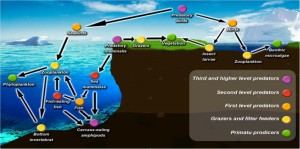 Schematic of the Arctic foodweb, illustrating the potential for bio-accumulation of pollutants (from Kozak et al, 2013)